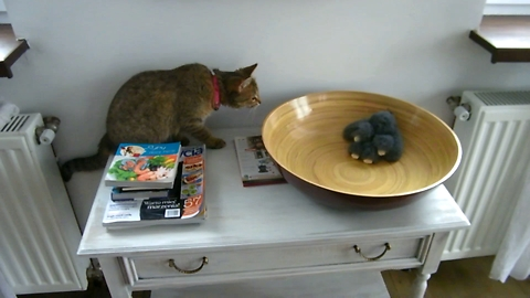 The Cat Steals His Favorite Toy From The Bowl.