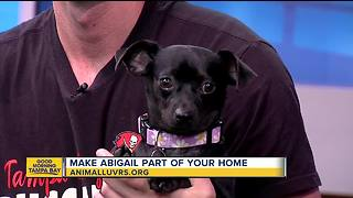 Rescues in Action Aug. 4, 2018 | Abigail seeks forever home - Video