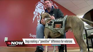 "Making a ""pawsitive"" difference for combat veterans"