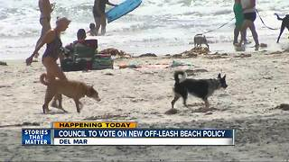 Council to vote on off-leash beach policy in Del Mar - Video