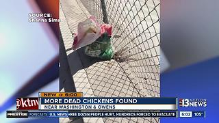 Even more dead chickens found in Las Vegas - Video