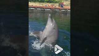 Playful Dolphin Wows Tourists By Playing The Drums On Water - Video