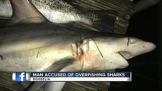 Man Accused of Over fishing Sharks - Video