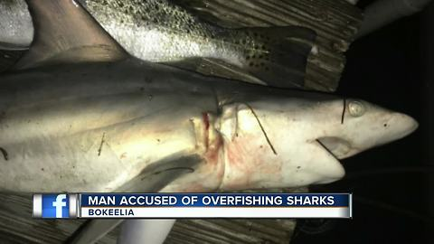 Man Accused of Over fishing Sharks