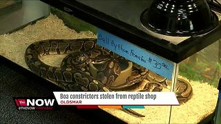 Boa constrictors stolen from reptile shop - Video
