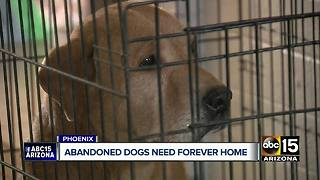 Valley rescue hoping to find homes for five dogs in 24 hours - Video