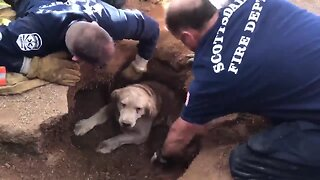 Scottsdale firefighters rescue dog trapped in hole