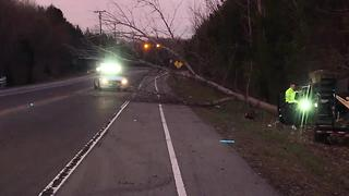 Tree Falls Onto Bell Road After Crash - Video