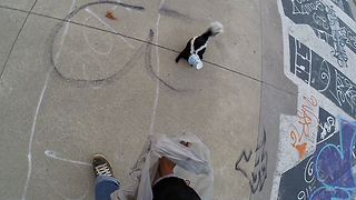 Skater rescues skunk with head stuck in cup - Video