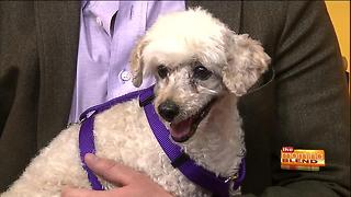 Pima Paws for LIfe in need of donations - Video