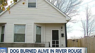 Dog burned alive in River Rouge - Video