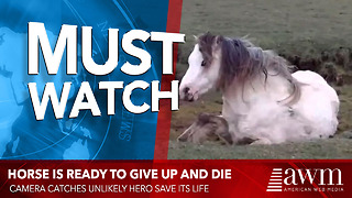 Horse Is Ready To Give Up And Die, When Camera Catches Unlikely Hero Save Its Life - Video
