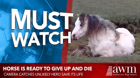 Horse Is Ready To Give Up And Die, When Camera Catches Unlikely Hero Save Its Life