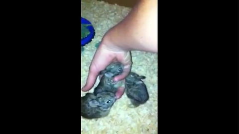 After mother's death, baby bunnies get second chance