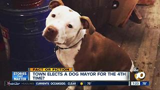 Dog elected mayor? - Video