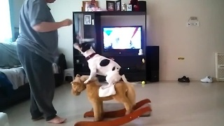 Dog balances on a rocking horse - Video