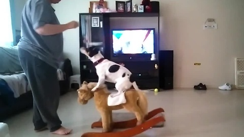 Dog balances on a rocking horse