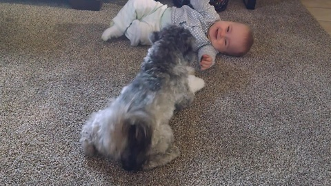 Baby enjoys playtime with energetic puppy