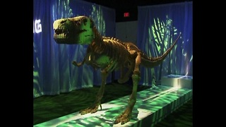 Largest Display Of Lego Art - Video