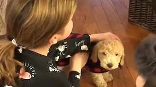 Little girl's tearful reaction after getting surprise puppy