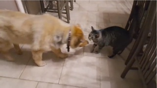 Cat's emotional reaction to reunion with blind dog - Video