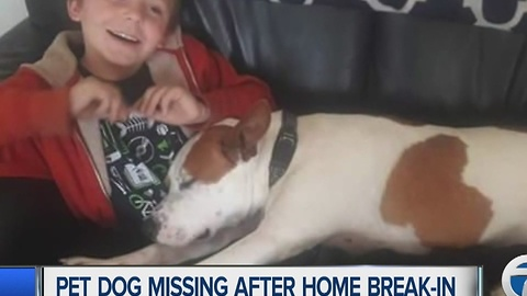 Pet dog missing after home invasion