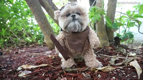 Munchkin the Teddy Bear's ewok audition for 'Rogue One: A Star Wars Story'