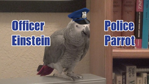 Talented parrot perfectly imitates police siren