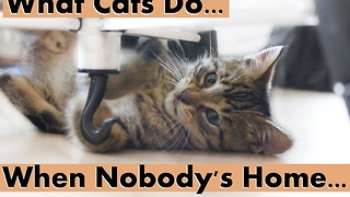 What Cats do when Nobody's Home - Video