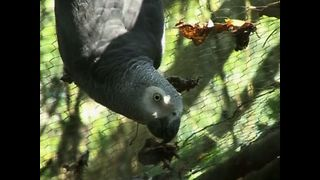 Parrots Rescued From Smugglers - Video