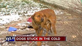 Dogs stuck outside in the cold - Video