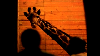 Chile Zoo Launches Nocturnal Tour - Video