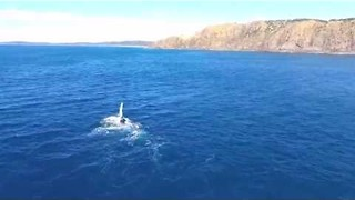 Drone Video Shows Whale Breaching and 'Waving' in Byron Bay - Video