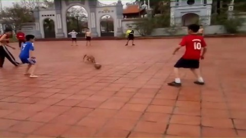 Pit Bull to play football with the kids