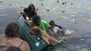 Golden Retriever Capsizes Canoe - Video