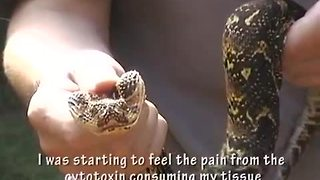 Guy gets bit by extremely venomous snake - Video