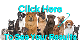 Take Our Quiz: What Dog Breed Would You Be? Saint Bernard - Video
