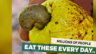 Millions Eat It Everyday But Have No Idea What It Actually Looks Like Before It's Processed - Video