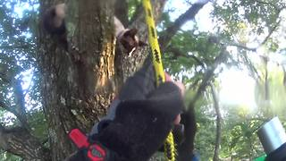 Cat stuck in tree for two days gets heroic rescue - Video