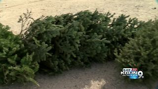 Christmas tree recycling begins Dec. 26th - Video