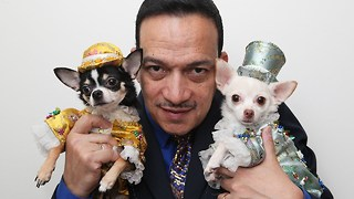 New York's Top Doggy Fashion Designer - Video