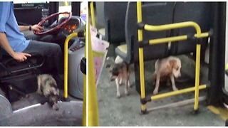 Bus driver breaks the rule by bringing the dogs on board shivering in a storm - Video