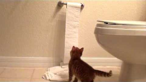 Kitten Discovers Toilet Paper