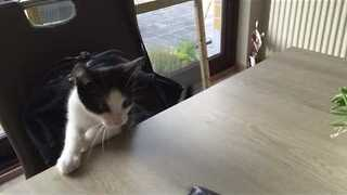 Kitten Keeps Reaching for Money That's Out of Reach - Video
