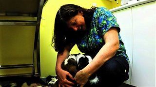 Veterinarian is surrounded by the most adorable puppies ever!