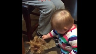 Laughing baby adorably shares her cookie with a dog