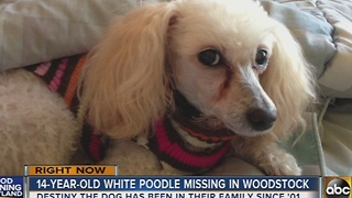 Blind dog missing in Howard County - Video