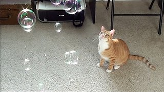 Catnip Bubbles! - Video