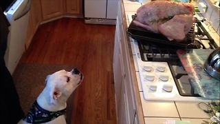 Alfonso's All Time Favorite Thanksgiving Videos