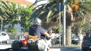 Dog driving on motorbike